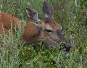 20140531_St. Andrews State Park_0256010614